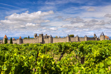 Vineyard with the Medieval Fortified Citadel Behind, Carcassonne, Languedoc-Roussillon, France Photographic Print by Stefano Politi Markovina