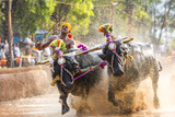Kambala, Traditional Buffalo Racing, Kerala, India Photographic Print by Peter Adams
