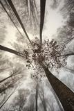 Italy, Friuli Venezia Giulia,Veneto, Cansiglio Forest Photographic Print by Daniele Pantanali