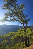 Parque Nacional De La Caldera De Taburiente, Mirador De Las Chozas, La Palma, Canaries, Spain Photographic Print by Katja Kreder