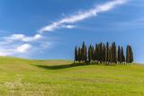 Cypress Trees, Val D'Orcia, Tuscany, Italy Photographic Print by Stefano Politi Markovina