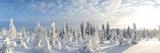 Snow Covered Trees, Riisitunturi National Park, Lapland, Finland Fotodruck von Peter Adams