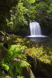 United Kingdom, England, North Yorkshire, Goathland. Thomason Foss Lies on the Route Photographic Print by Nick Ledger