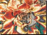 Echeveria Elegans Stretched Canvas Print