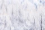 Luciano Gaudenzio - Italy, Friuli Venezia Giulia, Forest in the Snow - Fotografik Baskı
