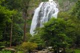 The 300-Foot-Tall Klong Lan Waterfall and Surrounding Forest Impressão fotográfica por Darlyne A. Murawski
