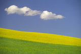 Puffy Clouds in a Blue Sky Suspended over a Yellow Canola Field and Green Grass Photographic Print by Michael Forsberg