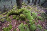 Moss Covered Tree Roots and Rocks in Fiordland National Park Photographic Print by Michael Melford
