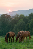 In Rural Hilly Farmland, a Team of Horses Feed on Grass at Sunset Photographic Print by Eric Kruszewski