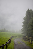 A Gravel Path Leading to a Foggy Meadow and Evergreen Forest Photographic Print by Ulla Lohmann