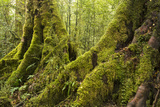 Vegetation on Milford Track in Fiordland National Park Photographic Print by Michael Melford