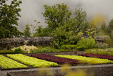 A Colorful Vegetable Garden for the Kitchen on a Foggy, Rainy Day Photographic Print by Ulla Lohmann