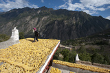 Drying Corn on the Rooftops of Traditional Tibetan Houses Photographic Print by Alex Treadway