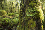 Vegetation on Hump Ridge Track, a Three-Day Hiking Trail in Fiordland National Park Photographic Print by Michael Melford