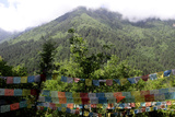 Tibetan Buddhist Prayer Flags Against a Forested Mountainside Photographic Print by Sean Gallagher