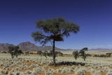 A Desert Landscape with Trees, Mountains, and Scrub Vegetation Photographic Print by Jonathan Irish