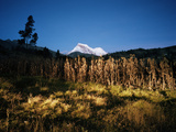 A Field of Corn Grown Within Sight of Huascaran Mountain, Illuminated at Night Photographic Print by Diane Cook Len Jenshel