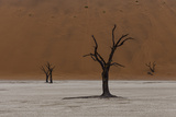 A Surreal Landscape of Dead Trees in a Clay Pan and Towering Sand Dunes Photographic Print by Jonathan Irish