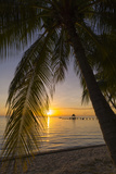 Over-The-Water Bungalows Framed by at Palm Tree at a Tropical Resort at Sunset