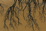 Dead Tree Branches in a Clay Pan with a Backdrop of Reddish-Brown Sand Dunes Photographic Print by Jonathan Irish
