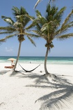 A Hammock Awaits Between Palm Trees on a White Sand Beach Fotografisk tryk af Macduff Everton