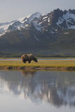 The Aleutian Range and a Brown Bear Reflect on Floodplain Waters Photographic Print by Matthias Breiter