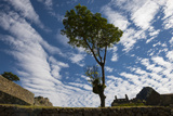 Wispy Clouds over a Tree and the Inca Ruins of Machu Picchu Lámina fotográfica por Diane Cook Len Jenshel