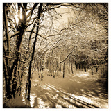 Snow Covered Canopy of Trees over a Cross Country Trail Photographic Print by Skip Brown