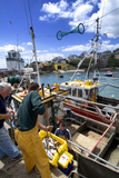 Unloaded the Catch from Fishing Boats at Ballycotton in County Cork, Ireland Photographic Print by Chris Hill