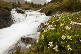 Wildflowers Blooming Next to a Rushing Stream During a Snow Storm Photographic Print by Keith Barraclough