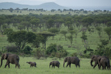 Elephants in a Plain Surrounded by Mountains in Serengeti National Park Fotografisk tryk af Michael Melford