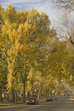 Fall-Colored Beech Trees Line a Neighborhood Street Photographic Print by Gordon Wiltsie