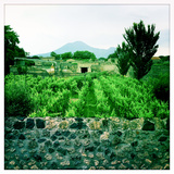 Roman Walls and Vineyards in Pompeii and Mount Vesuvius in the Background Photographic Print by Skip Brown