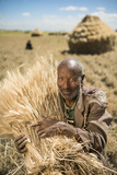 A Farmer Stacks Wheat in Ethiopia Fotografisk tryk af Jim Richardson