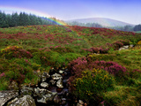 Rainbow and Heather in County Wicklow, Ireland Photographic Print by Chris Hill