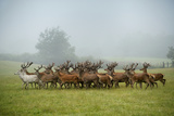 A Herd of Deer on a Farm in Auchtermuchty Photographic Print by Jim Richardson