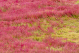 Brilliantly Colored Grasses on Mason's Island in the Fall Photographic Print by Michael Melford