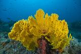 Brian J. Skerry - Marine Life at Nudi Rock in the Misool Region - Fotografik Baskı