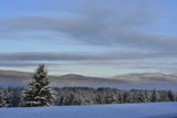 Snow Covered Evergreen Trees and a Blue Sky with Clouds Photographic Print by Raul Touzon