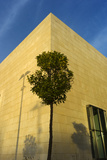 A Tree Outside the Guggenheim Museum Bilbao Photographic Print by Tino Soriano