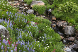 Wildflowers, Rocks and a Small Flowing Stream in a Landscape on Mount Rainier Photographic Print by Eric Kruszewski