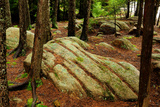 Trees and Rocks in a Forest Understory in Acadia National Park Photographic Print by Darlyne A. Murawski