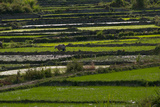 Rice Growing in the Quan Tri are of Vietnam Photographic Print by Karen Kasmauski