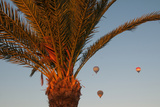 Hot Air Balloons Behind a Palm Tree in the Valley of the Kings Near Luxor Photographic Print by Karen Kasmauski