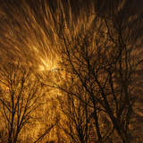 New Year's Fireworks Seen Through the Tree Tops Photographic Print by Babak Tafreshi