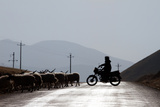 A Tibetan Farmer Herds His Cattle Using a Motorcycle Photographic Print by Sean Gallagher