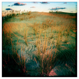 Sea Oats in the Dunes of Jockey Ridge State Park Photographic Print by Skip Brown