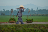 Carrying Vegetables to Market around Phong Triu in the Danang Area of Vietnam Photographic Print by Karen Kasmauski