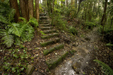 An Old Stairway in Historical Gore Creek Reserve Photographic Print by Bill Hatcher