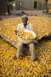 A Farmer Drying Corn Fotografisk tryk af Jim Richardson